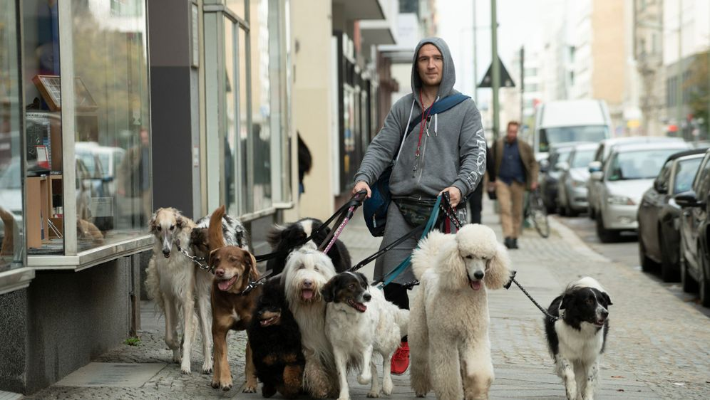 Wuff - Folge dem Hund - Bildquelle: Foo