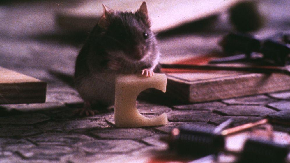 Mäusejagd - Bildquelle: Foo