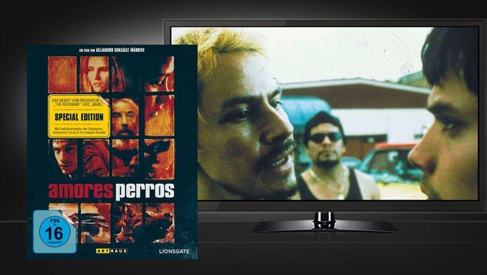 Amores Perros (Blu-ray) - Bildquelle: Foo
