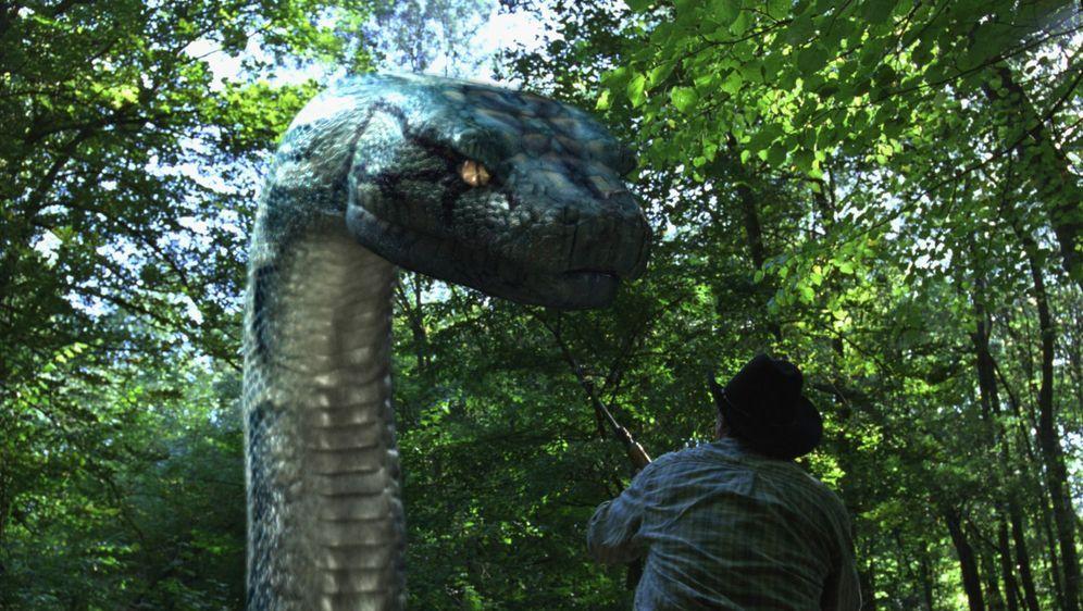 Boa vs. Python - Duell der Killerschlangen - Bildquelle: Foo