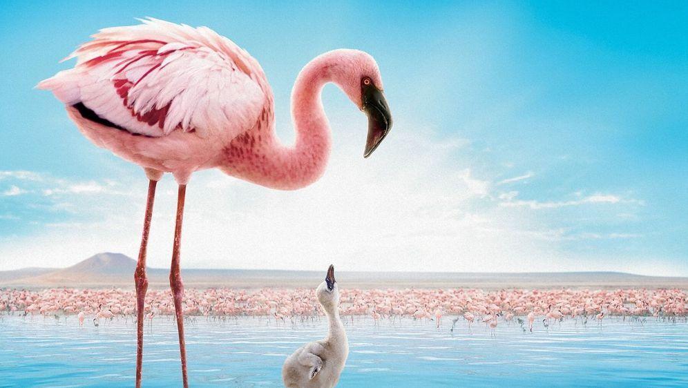 Das Geheimnis der Flamingos - Bildquelle: Foo