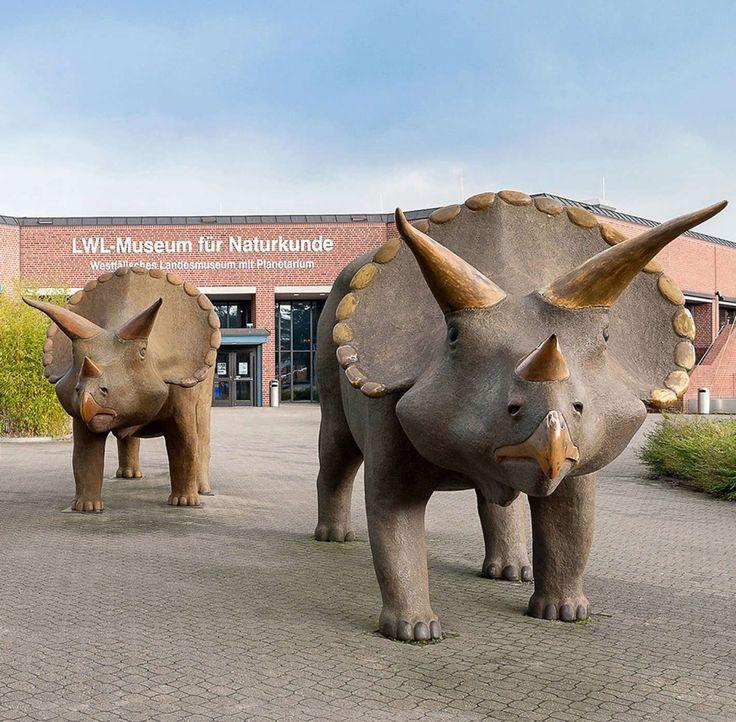 Museum fuer Naturkunde in Muenster-79de3fee1f0dc1011ee8a5d1 - Bildquelle: LWL/Steinweg