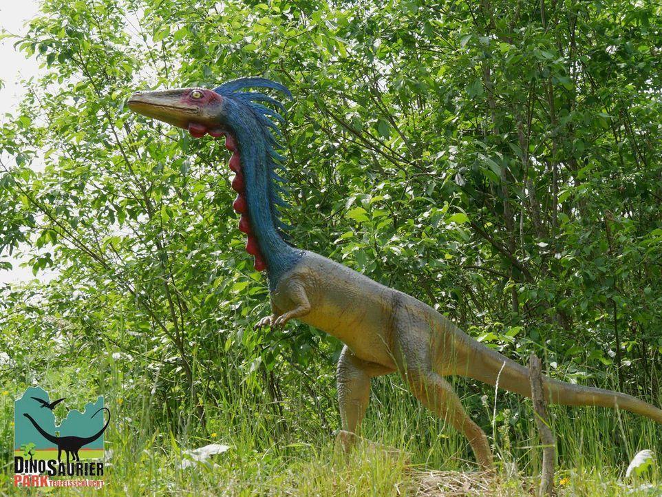 Dinosaurierpark Teufelsschlucht-3c56a88b7a97f0257fc3aece