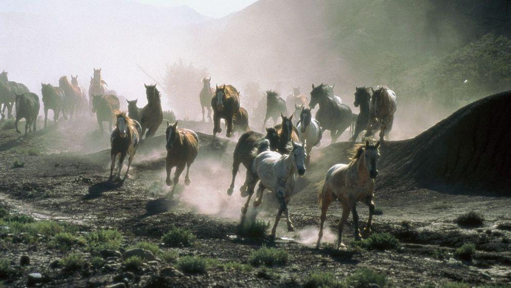 All die schönen Pferde - Bildquelle: Foo