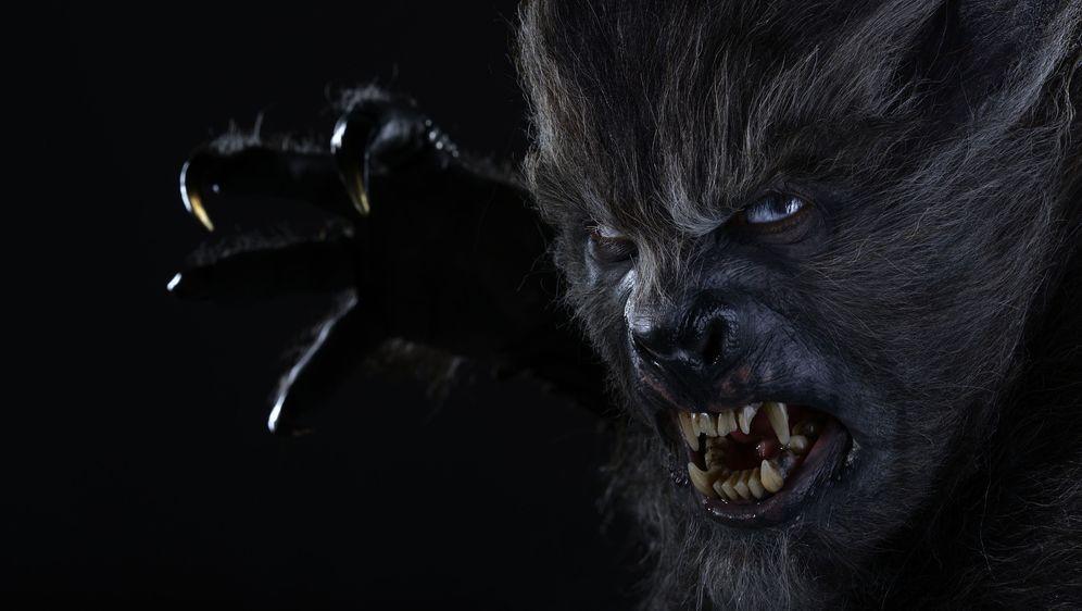 Wolves - Bildquelle: Foo