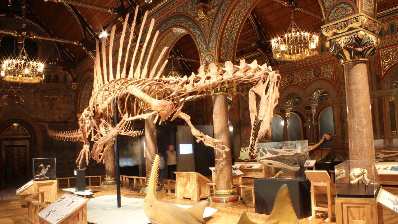 Naturhistorisches Museum Braunschweig-a1e70371cbb7c5bb4e48517a