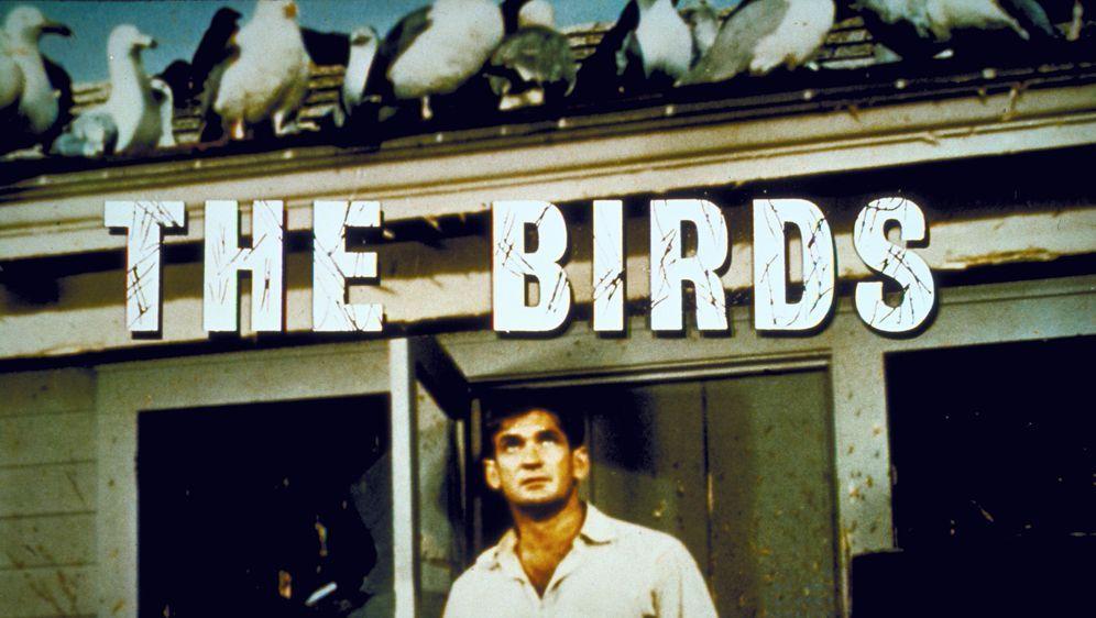 Die Vögel - Bildquelle: Foo
