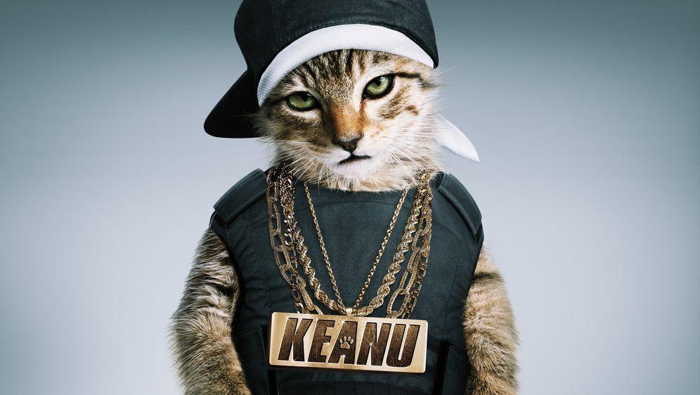 Keanu - Her mit dem Kätzchen - Bildquelle: Foo